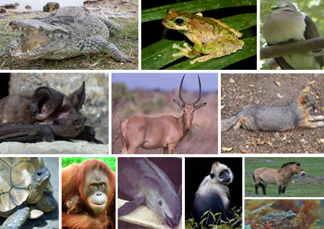 CRITICAL-CONDITION-12-EXTREMELY-RARE-AND-ENDANGERED-ANIMALS1