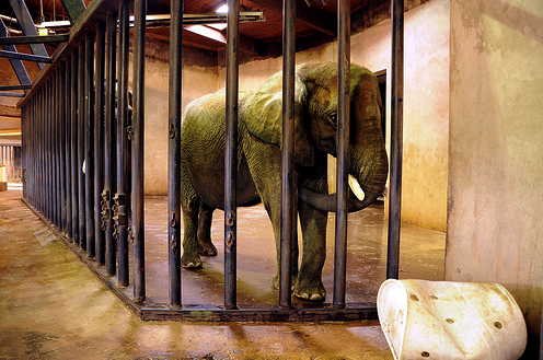elephant locked up