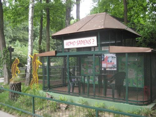 Homo sapiens zoo exhibit